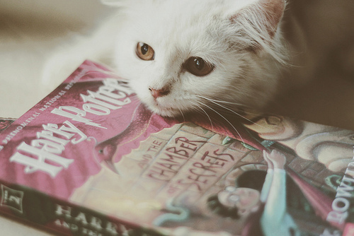 adventure, amber, books, cat, chamber of secrets