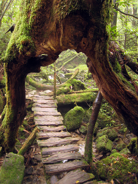 adventure, bark, beautiful, branch, branches, cute, fairytale, fantasy, forest, green, moss, nature, outdoors, path, photography, rock, rocks, stairs, steps, trail, tree, trees, trunk, twig, twigs, water, wood, woods