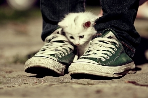 all star, cat, cool, cute, dude, fofo, gato, kitty, love, pet, relax, street