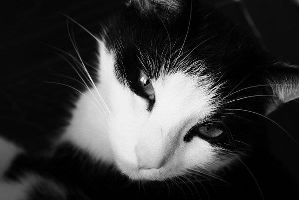 alone, animal, black, black and white, black cat