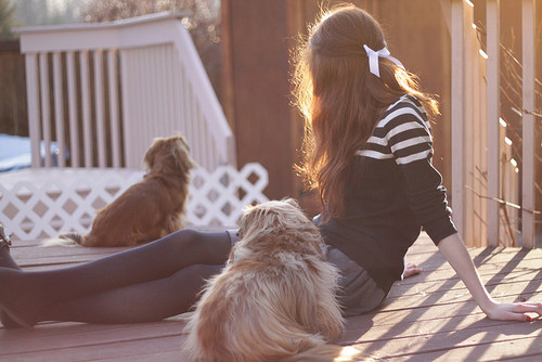 alone, dog, dogs, girl, light, puppy, sun