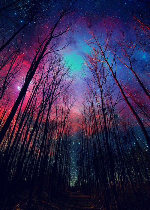 amazing, awesome, beautiful, blue, cool, deadroses, forest, green, lights, night, night sky, photography, pink, pretty, sky, space, stars, trees