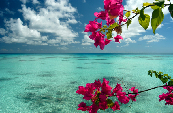 amazing, beach, beautiful, flower, flowers, pink, sea, sky, water, wonderful