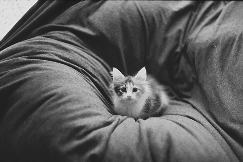 <3, animal, awh, bad is the new good, black and white, cat, cute, kitten