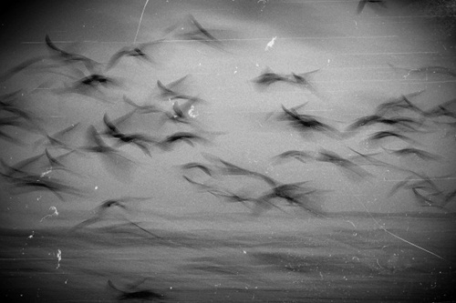 analog, b/w, beautiful, birds, cute