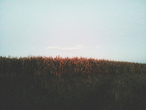 analog, cute, grain, heaven, hipster, indie, nature, sky, trees
