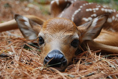 animal, animals, bambi, cute, deer