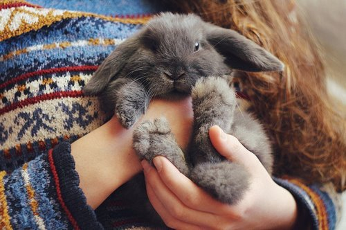 animal, animals, beautifull, bunny, cute, fashion, girl, hair, hands, photography, picture, rabbit