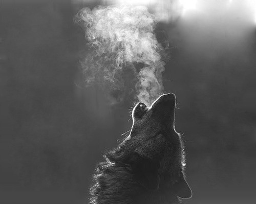 animal, animals, black and white, smoke, wolf