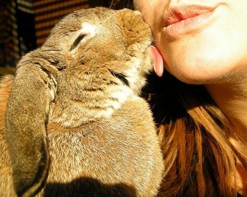 animal, animals, bunny, cute, face, girl, kiss, lick