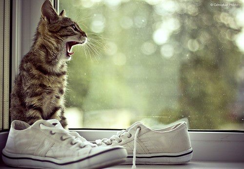animal, animals, cat, funny, little