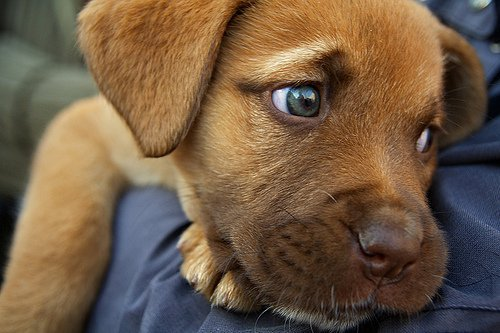 animal, animals, cute, dog, dogs, eyes, hug, hugs, love, man, puppy, sad