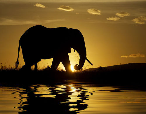 animal, awesome, beautiful, cool, elephant, inspiring, nature, pretty, sunset