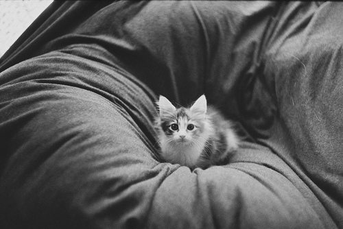 animal, awn, b&amp;w, beauty, cat