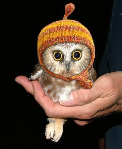 animal, baby, baby animal, cute, hat, hipster, hoot, orange, owl, red, woop, woot