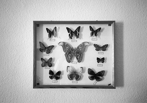 animal, b&amp;w, black &amp; white, black and white, butterflies