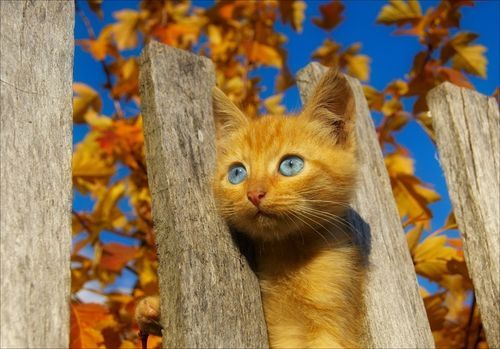 animal, beautiful, blue, cat, cute, leafs, orange, summer, wonderful