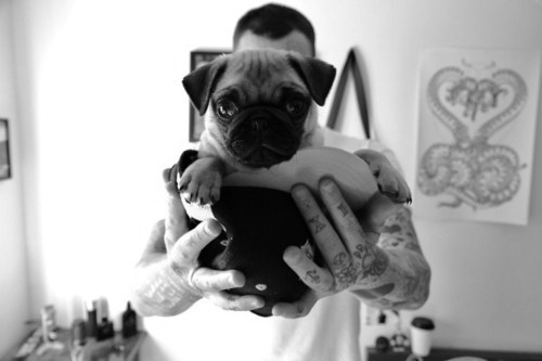 animal, black and white, cute, dog, inked
