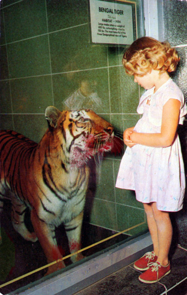 animal, blood, child, cute, girl, indie, kid, photography, tiger, vintage