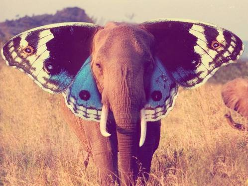 animal, butterfly, elephant, photoshop, wings