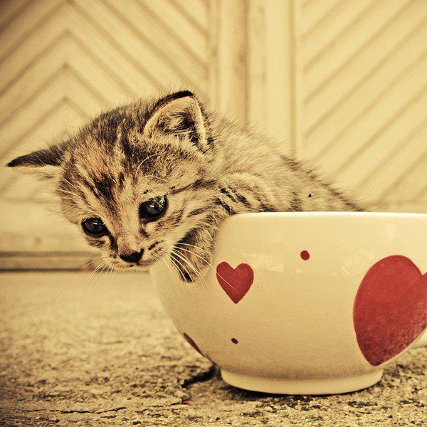 animal, cat, cip, coffe, cute