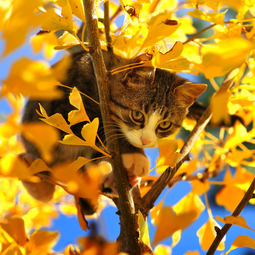 animal, cat, cute, funny, kitten, leaf, pet, tree, yellow