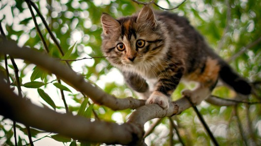 animal, cat, photography, tree