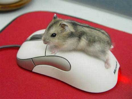 animal, computer, cute, mouse, red