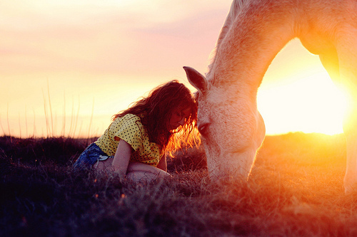animal, beautiful, fashion, field, grass, horse, light, red hair, summer, sun, sunlight, sunrise, sunset