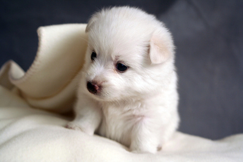 animals, awwww, cute, dog, puppy