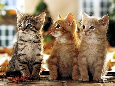 animals, baby, beautiful, cat, cats, cute, family, friends, ginger, kitten, kittens, lovely, lovers, photography, together