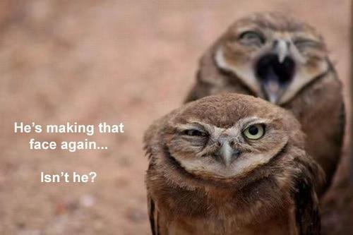 animals, birds, cute, making faces, owl, owls