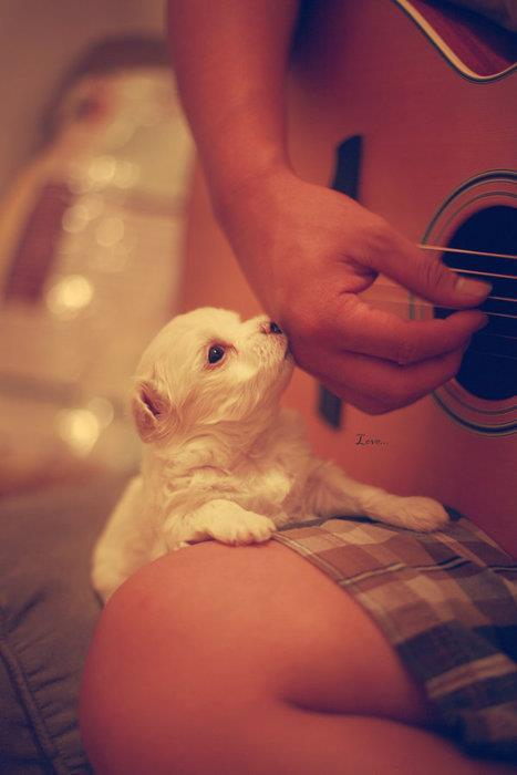 arm, boy, dog, dogs, guitar