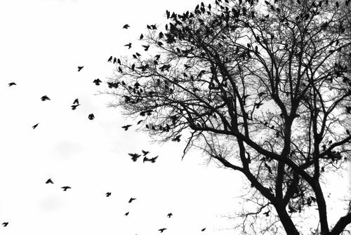 art, balck and white, nature, photography
