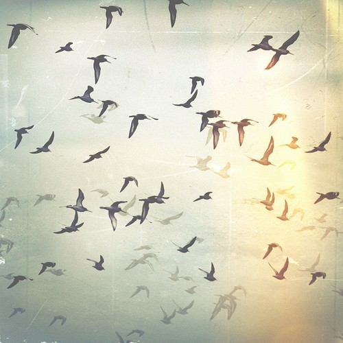 art, beautiful, birds, photo, photography - image #418061 ...