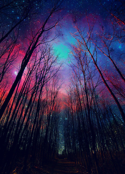 atmosphere, forest, milky way, nature, night