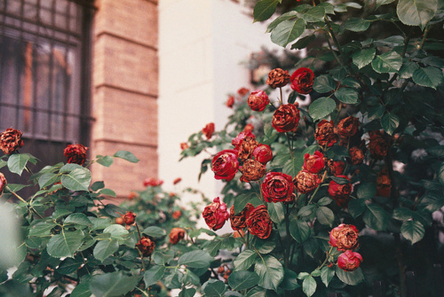 autumn, brick, exterior, flower, flowers, garden, house, landscape, nature, spring, summer, vintage, winter