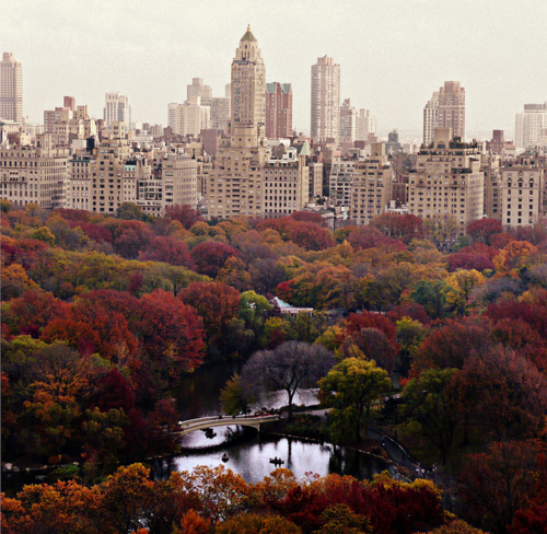 autumn, central park, new york city, photography