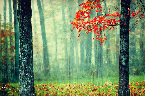 autumn, forest, green, leaves, mist