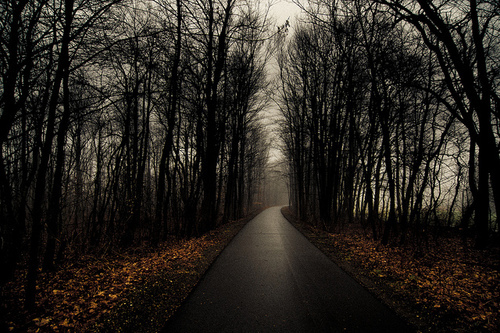 autumn, forest, grey, leaves, path, photo, photography, rain, sky, trees, winter