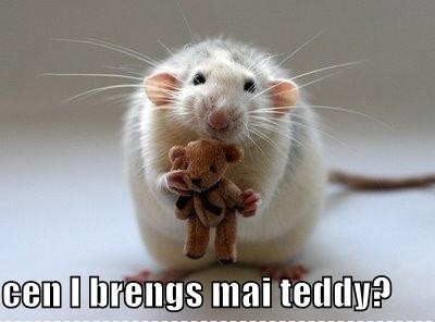 awi, can i bring my teddy, cute, haha, lol, mouse, rat, sweet, teddy