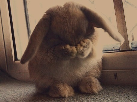 awn, aww, baby, bunny, cute, little, lop, love, miss you, omg, puppy, rabbit