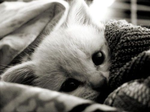 awn, b&w, black and white, cat, cute