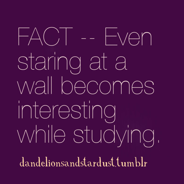 aww, exams, fact, facts, funny