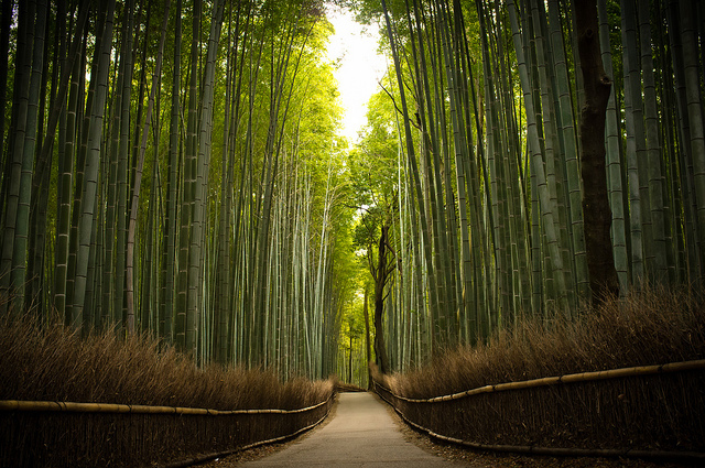 bamboo, forest, green, hike, nature