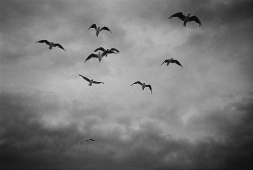 b&w, bird, birds, black & white, black and white