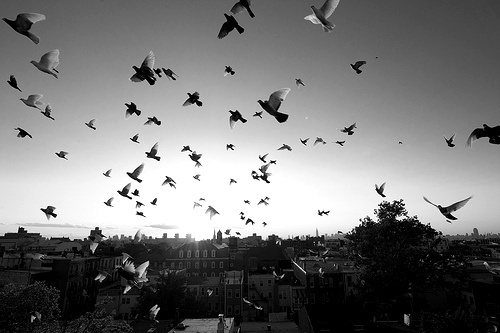 b&w, bird, birds, black & white, black and white, city, cute, landscape, nature, photo, photography, sky