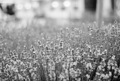 b&w, black & white, black and white, cute, flower, flowers, landscape, nature, photo, photography, place