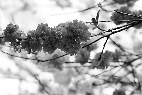 b&w, black & white, black and white, cute, flower, flowers, landscape, nature, photo, photography