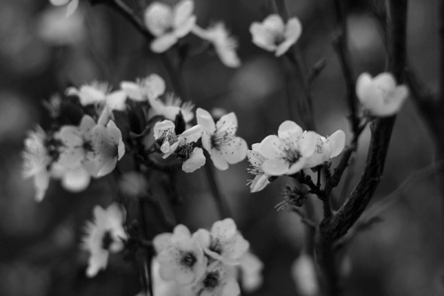 b&w, black & white, black and white, cute, flower, flowers, landscape, loves, nature, photo, photography, white